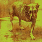 Album Alice in chains